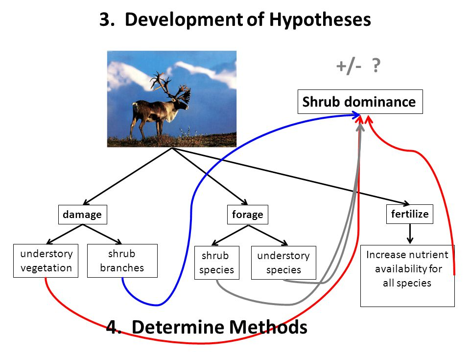 3. Development of Hypotheses