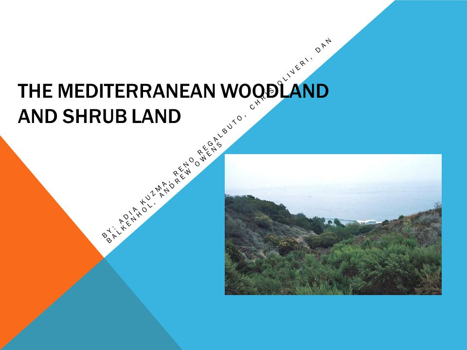 The Mediterranean woodland and shrub land