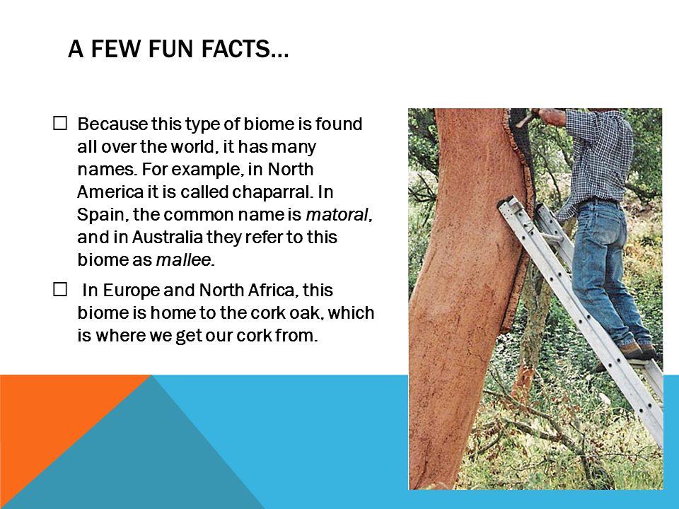 A few fun facts…