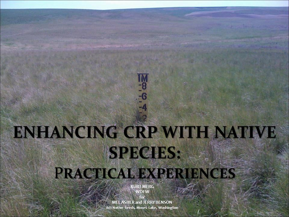 Enhancing CRP With Native Species: PRACTICAL EXPERIENCES