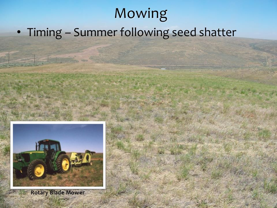 Mowing Timing – Summer following seed shatter Rotary Blade Mower
