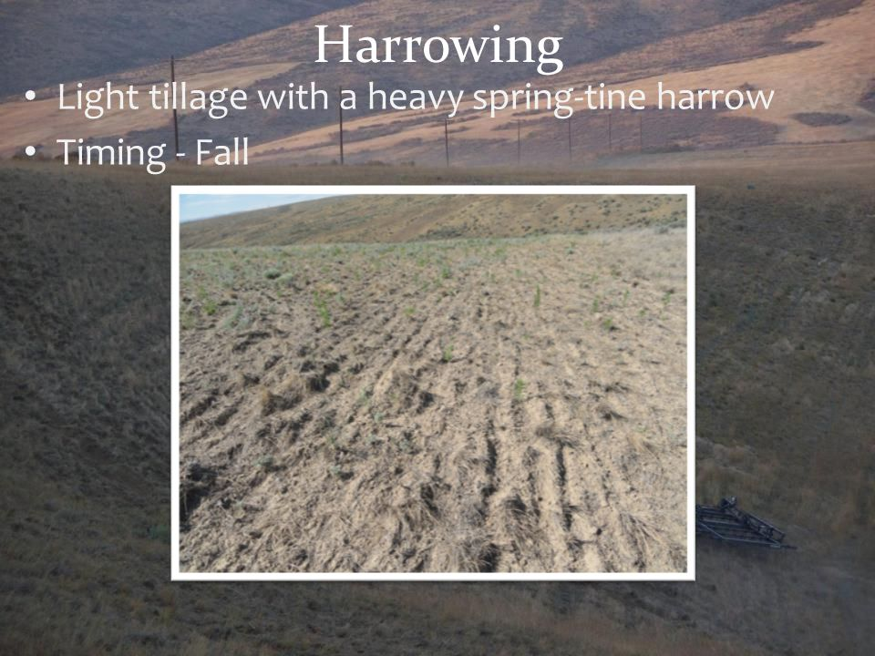 Harrowing Light tillage with a heavy spring-tine harrow Timing - Fall