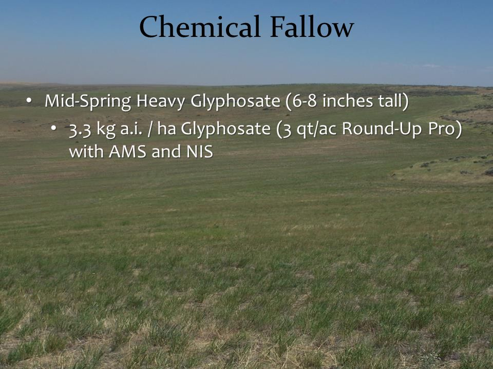 Chemical Fallow Mid-Spring Heavy Glyphosate (6-8 inches tall)