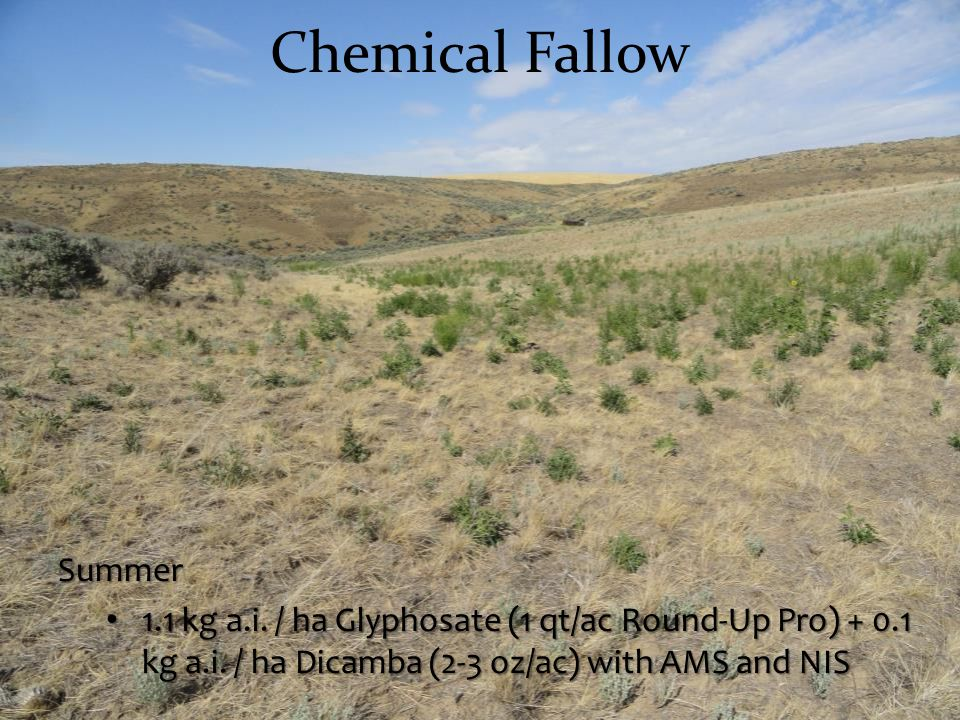 Chemical Fallow Summer