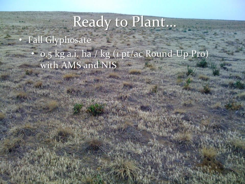Ready to Plant… Fall Glyphosate