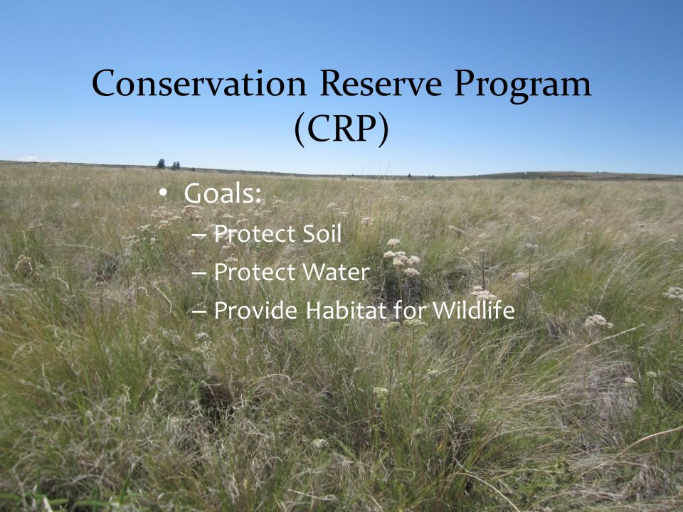 Conservation Reserve Program (CRP)
