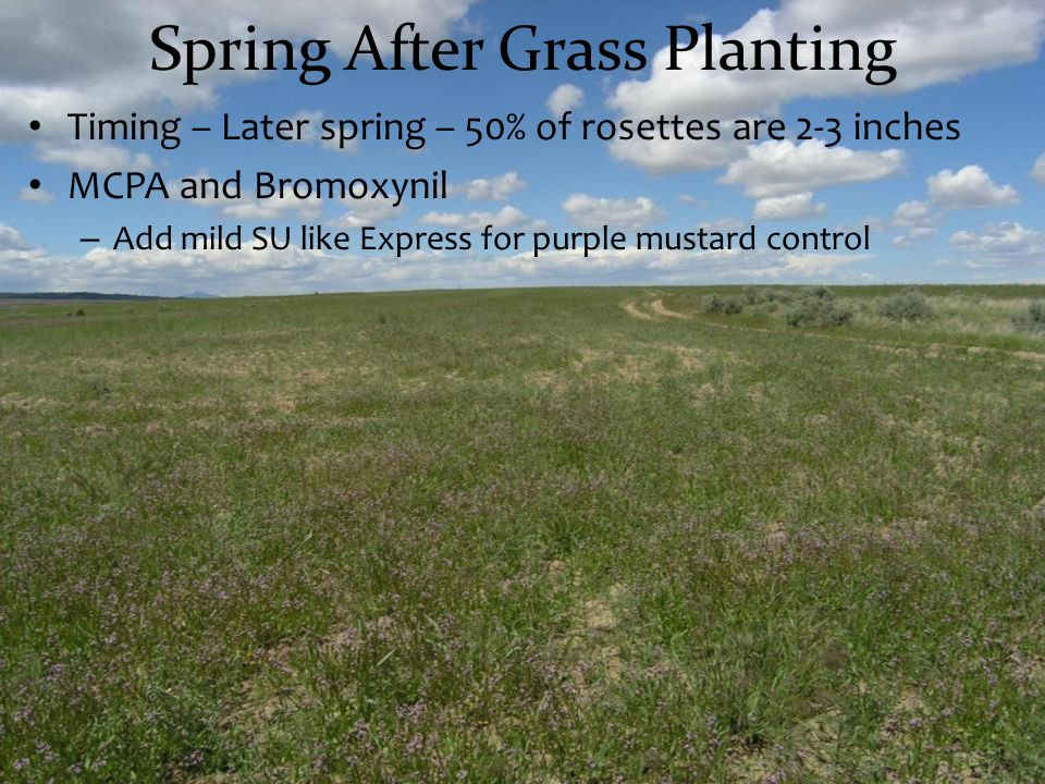 Spring After Grass Planting