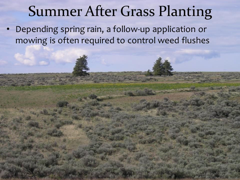 Summer After Grass Planting