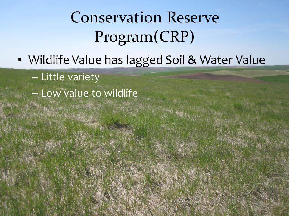 Conservation Reserve Program(CRP)