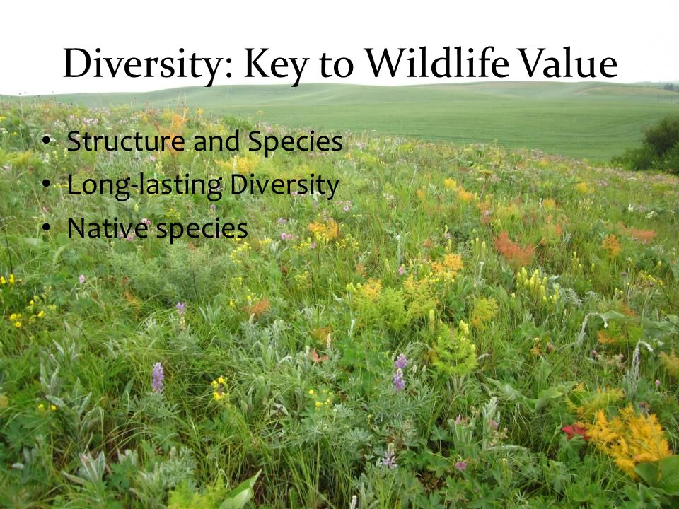 Diversity: Key to Wildlife Value