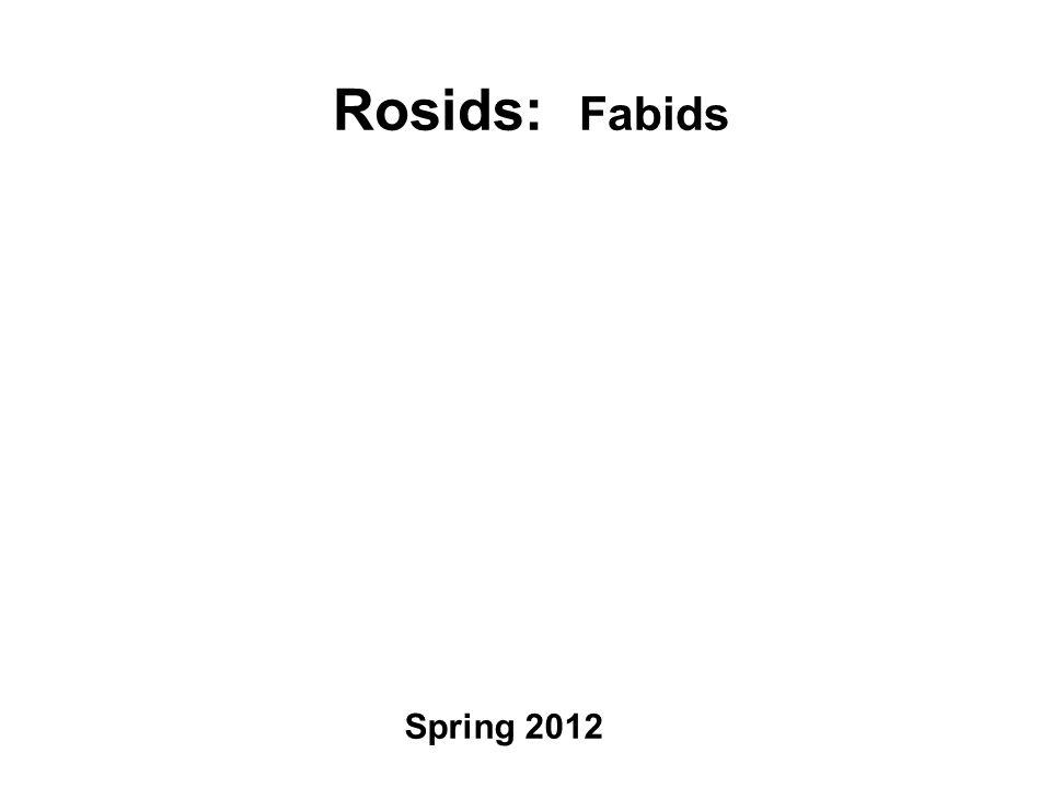Rosids: Fabids Spring 2012