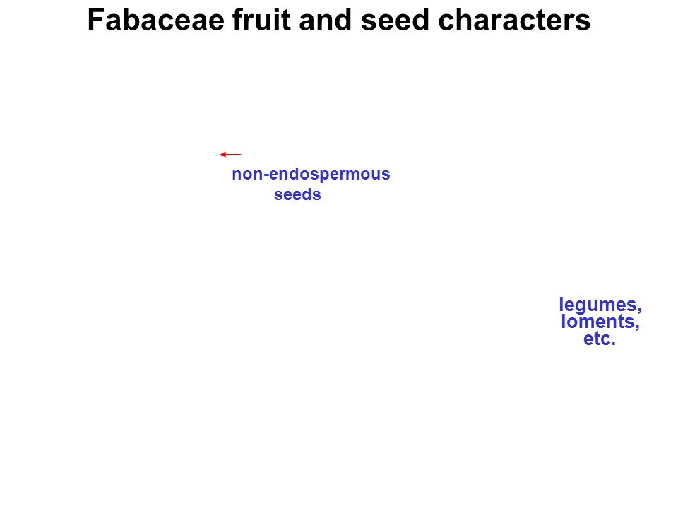 Fabaceae fruit and seed characters