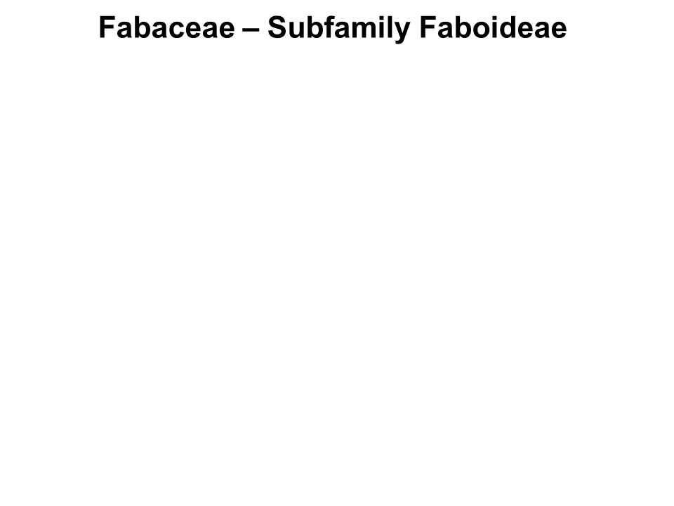 Fabaceae – Subfamily Faboideae