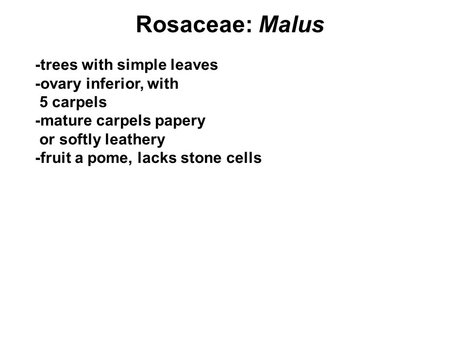 Rosaceae: Malus -trees with simple leaves -ovary inferior, with