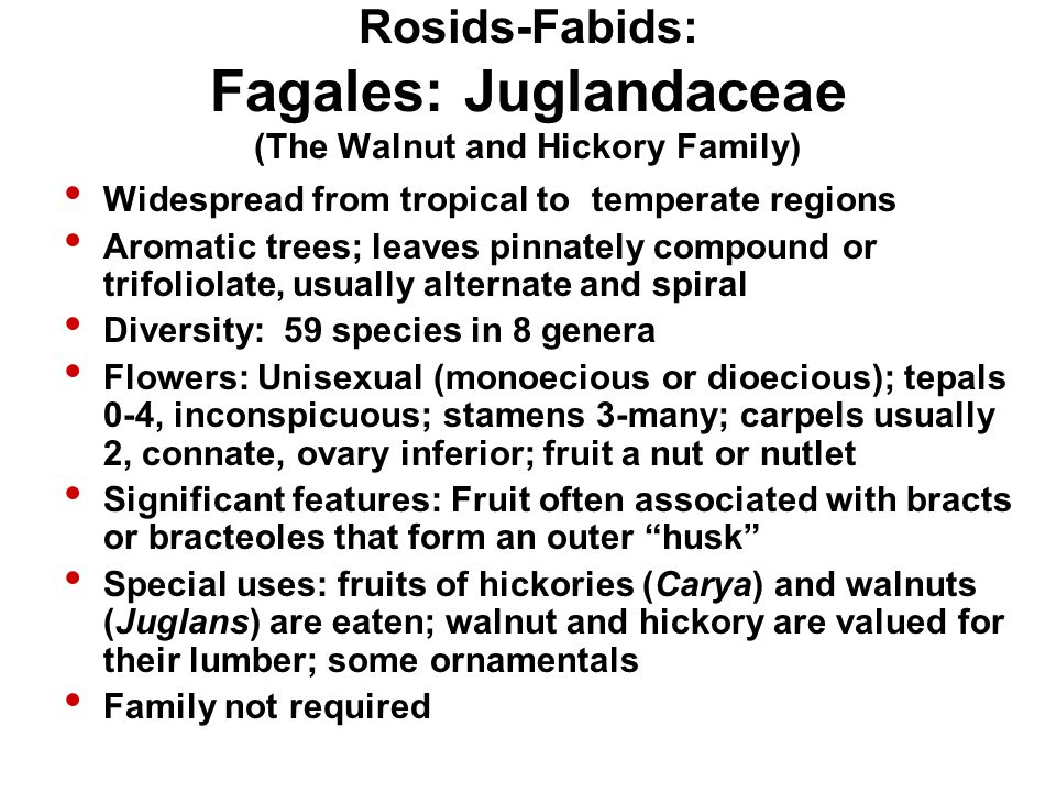 Rosids-Fabids: Fagales: Juglandaceae (The Walnut and Hickory Family)