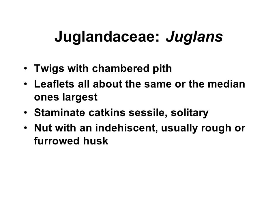 Juglandaceae: Juglans