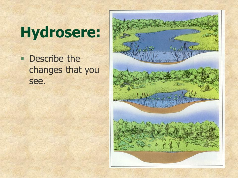 Hydrosere: Describe the changes that you see.
