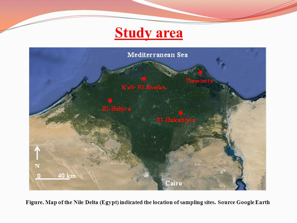 Study area Figure. Map of the Nile Delta (Egypt) indicated the location of sampling sites.
