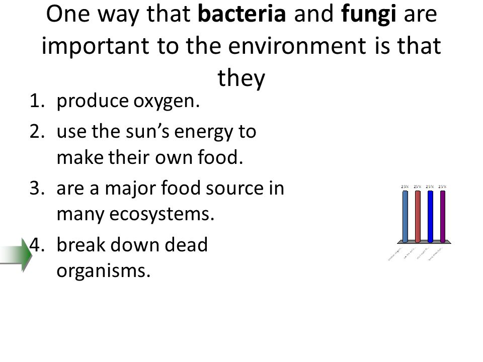 One way that bacteria and fungi are important to the environment is that they