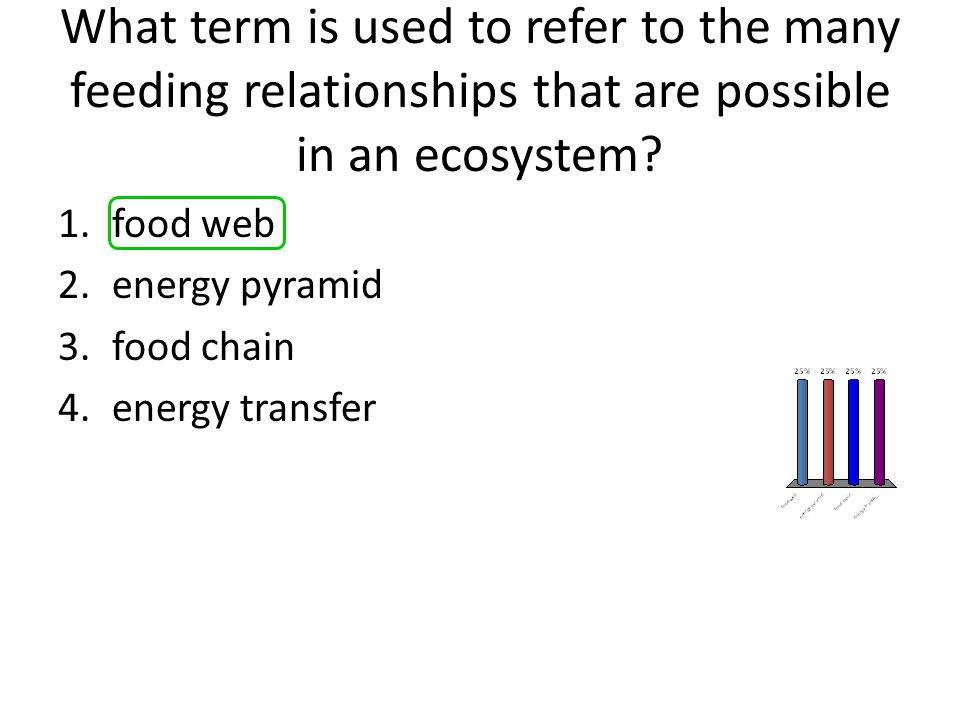 What term is used to refer to the many feeding relationships that are possible in an ecosystem
