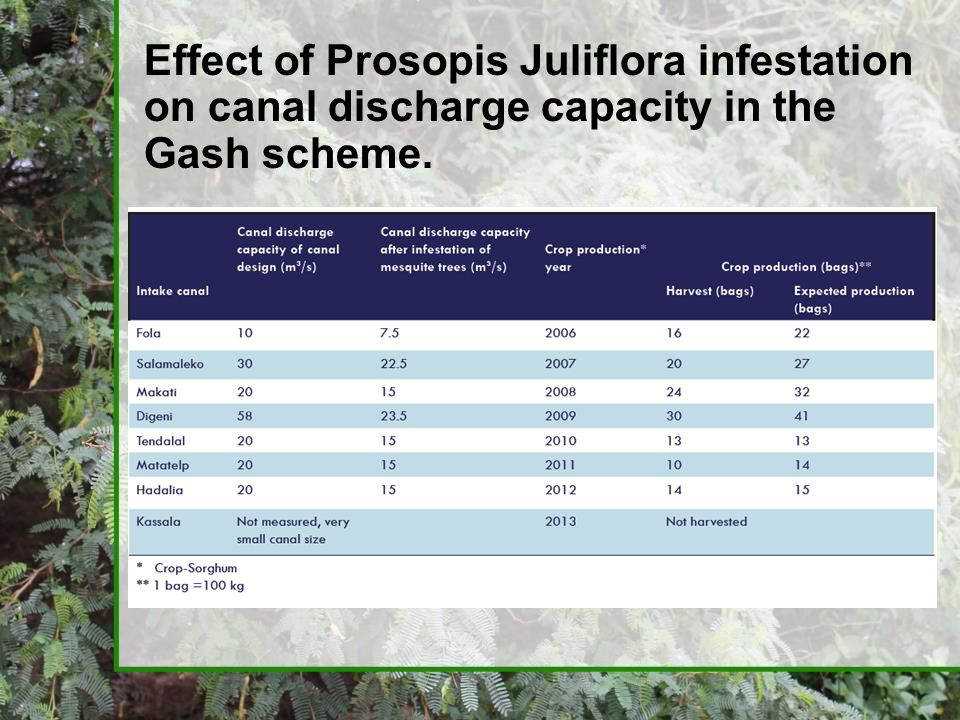 Effect of Prosopis Juliflora infestation on canal discharge capacity in the Gash scheme.