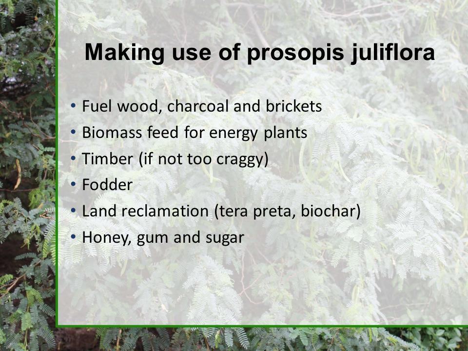 Making use of prosopis juliflora
