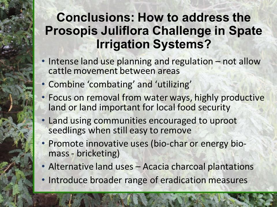 Conclusions: How to address the Prosopis Juliflora Challenge in Spate Irrigation Systems