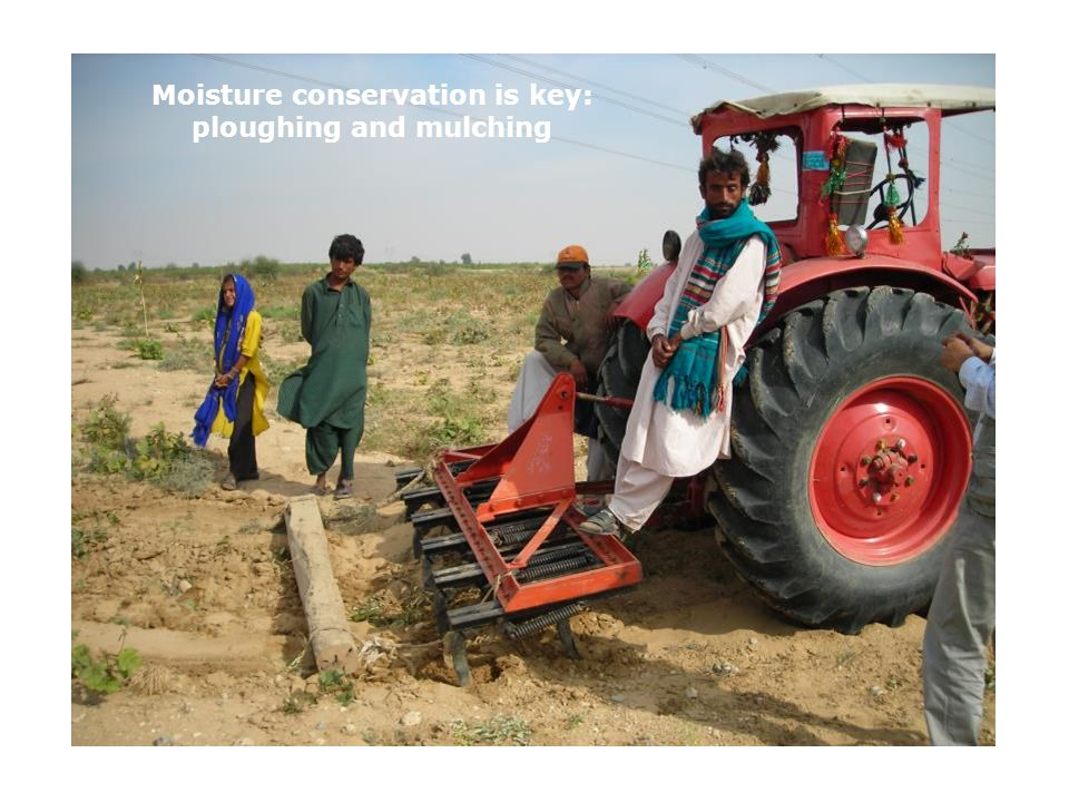 Moisture conservation is key: ploughing and mulching