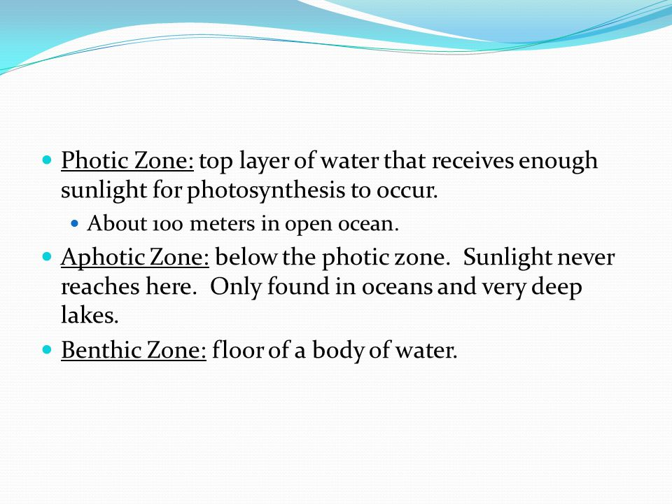 Benthic Zone: floor of a body of water.