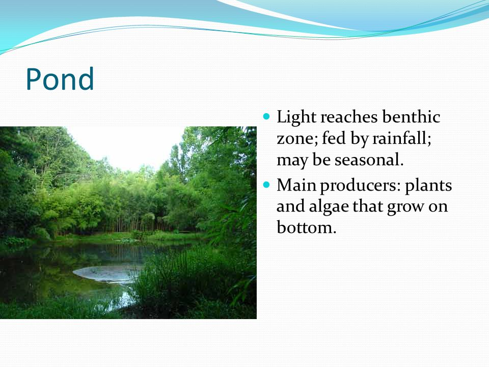 Pond Light reaches benthic zone; fed by rainfall; may be seasonal.