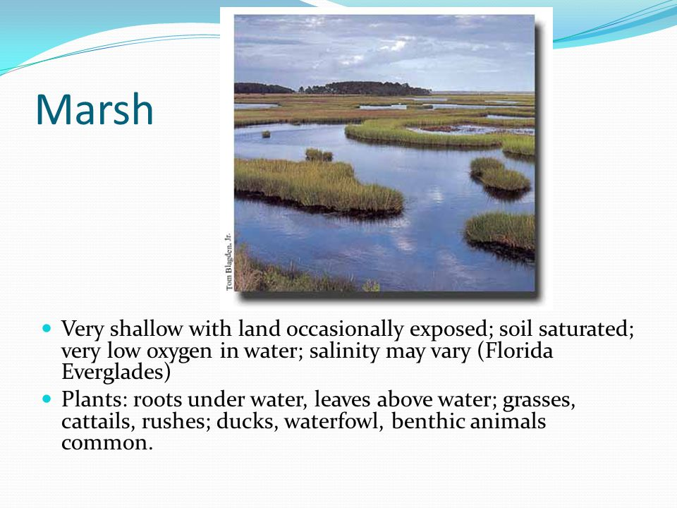 Marsh Very shallow with land occasionally exposed; soil saturated; very low oxygen in water; salinity may vary (Florida Everglades)