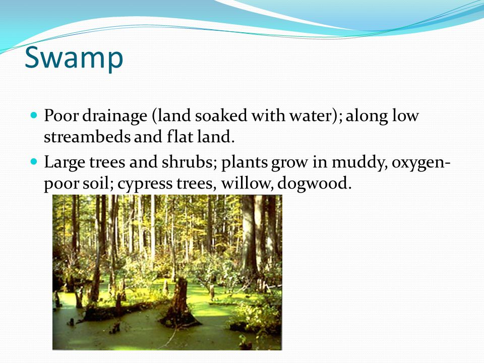 Swamp Poor drainage (land soaked with water); along low streambeds and flat land.