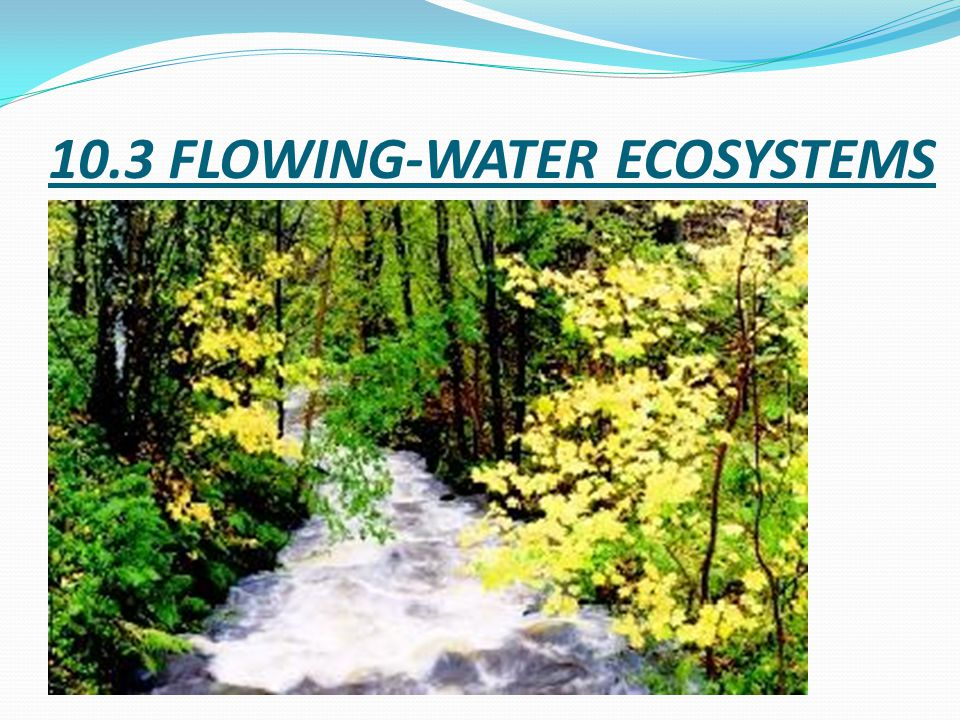 10.3 FLOWING-WATER ECOSYSTEMS