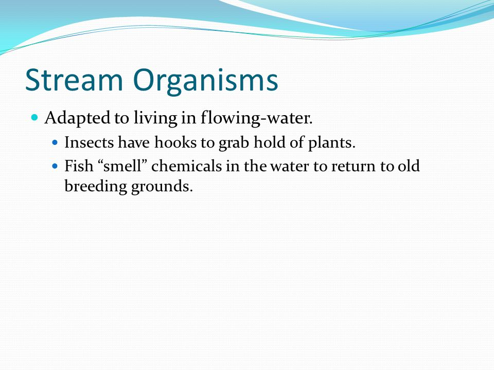 Stream Organisms Adapted to living in flowing-water.