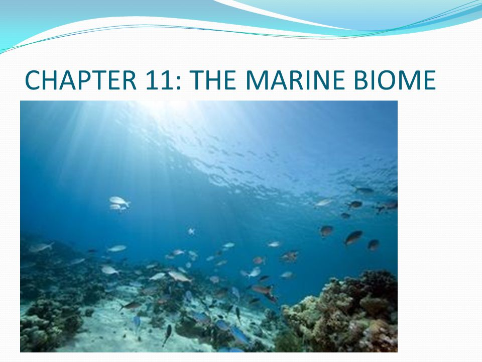 CHAPTER 11: THE MARINE BIOME