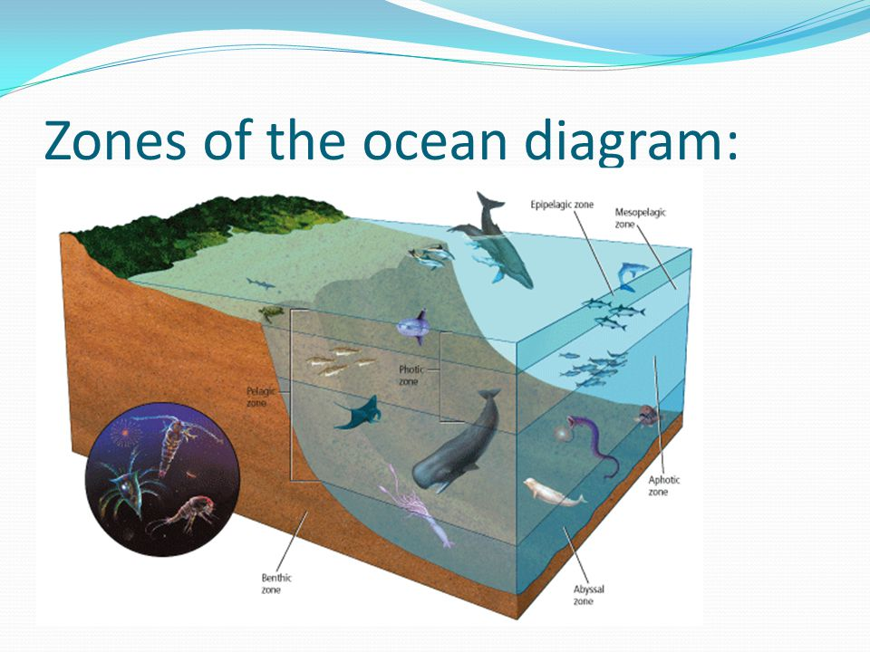 Zones of the ocean diagram:
