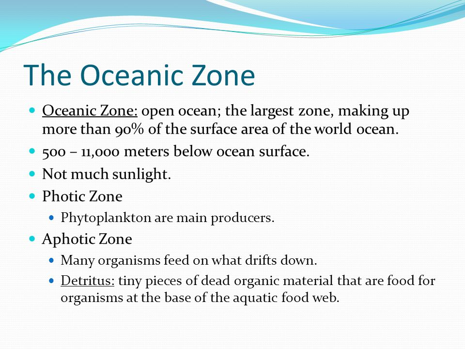 The Oceanic Zone Oceanic Zone: open ocean; the largest zone, making up more than 90% of the surface area of the world ocean.