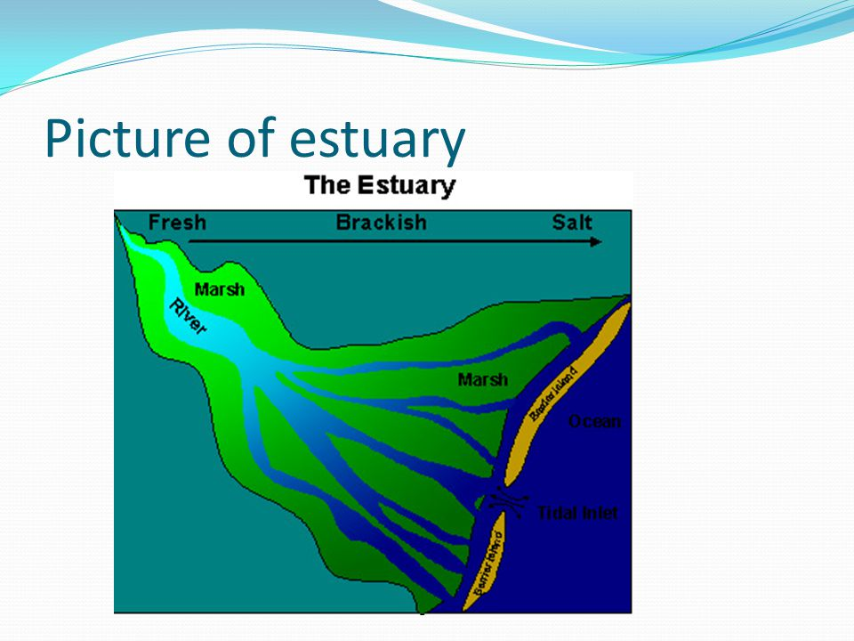 Picture of estuary