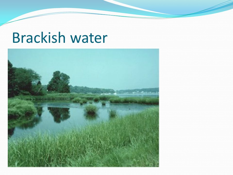 Brackish water