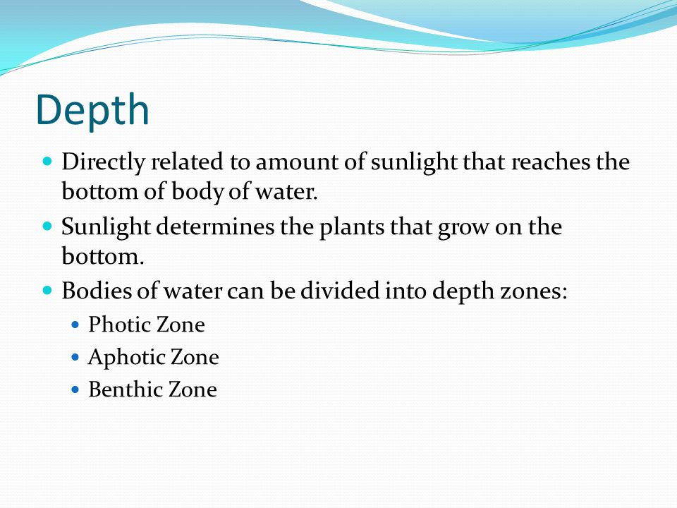 Depth Directly related to amount of sunlight that reaches the bottom of body of water. Sunlight determines the plants that grow on the bottom.