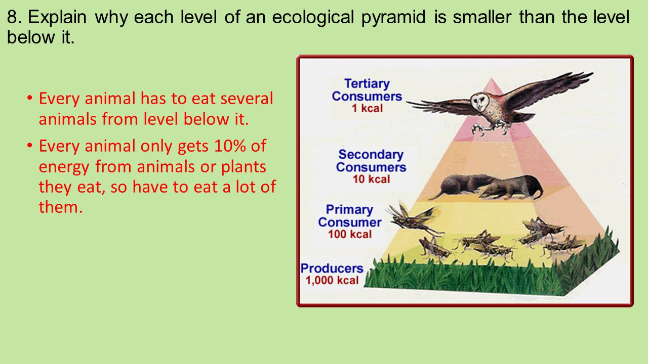 8. Explain why each level of an ecological pyramid is smaller than the level below it.