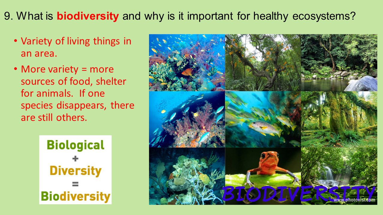 9. What is biodiversity and why is it important for healthy ecosystems