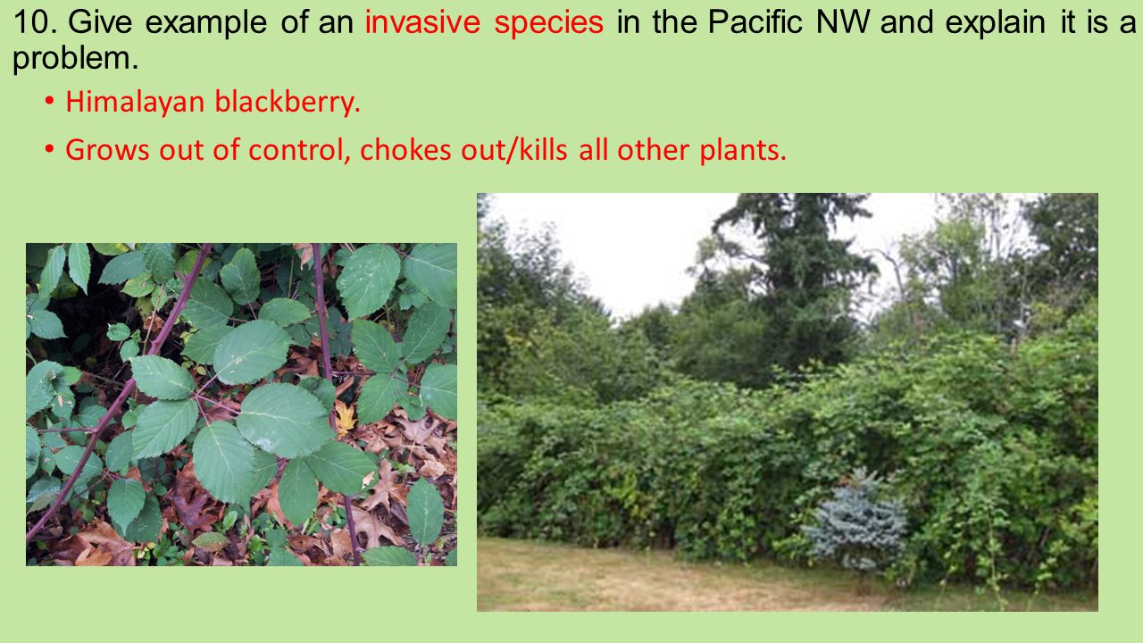 10. Give example of an invasive species in the Pacific NW and explain it is a problem.