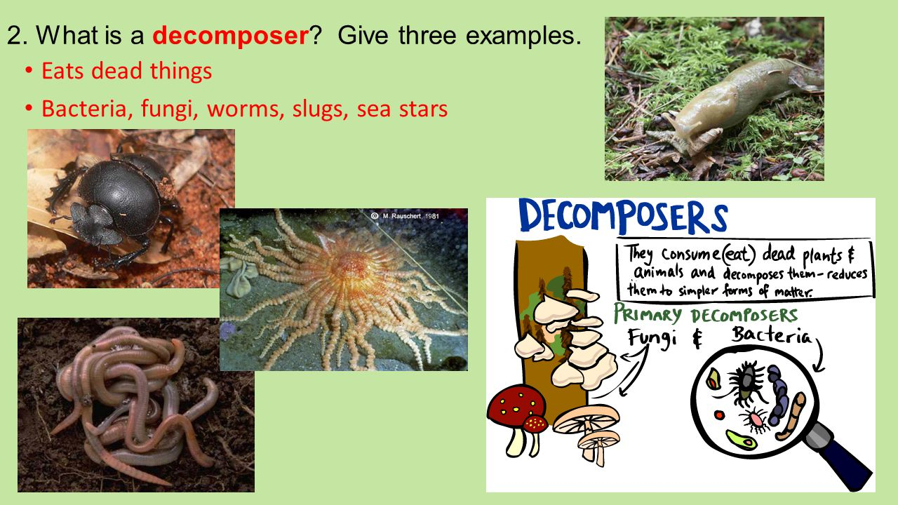 2. What is a decomposer Give three examples.