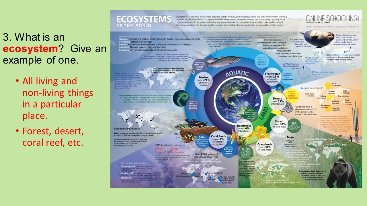 3. What is an ecosystem Give an example of one.