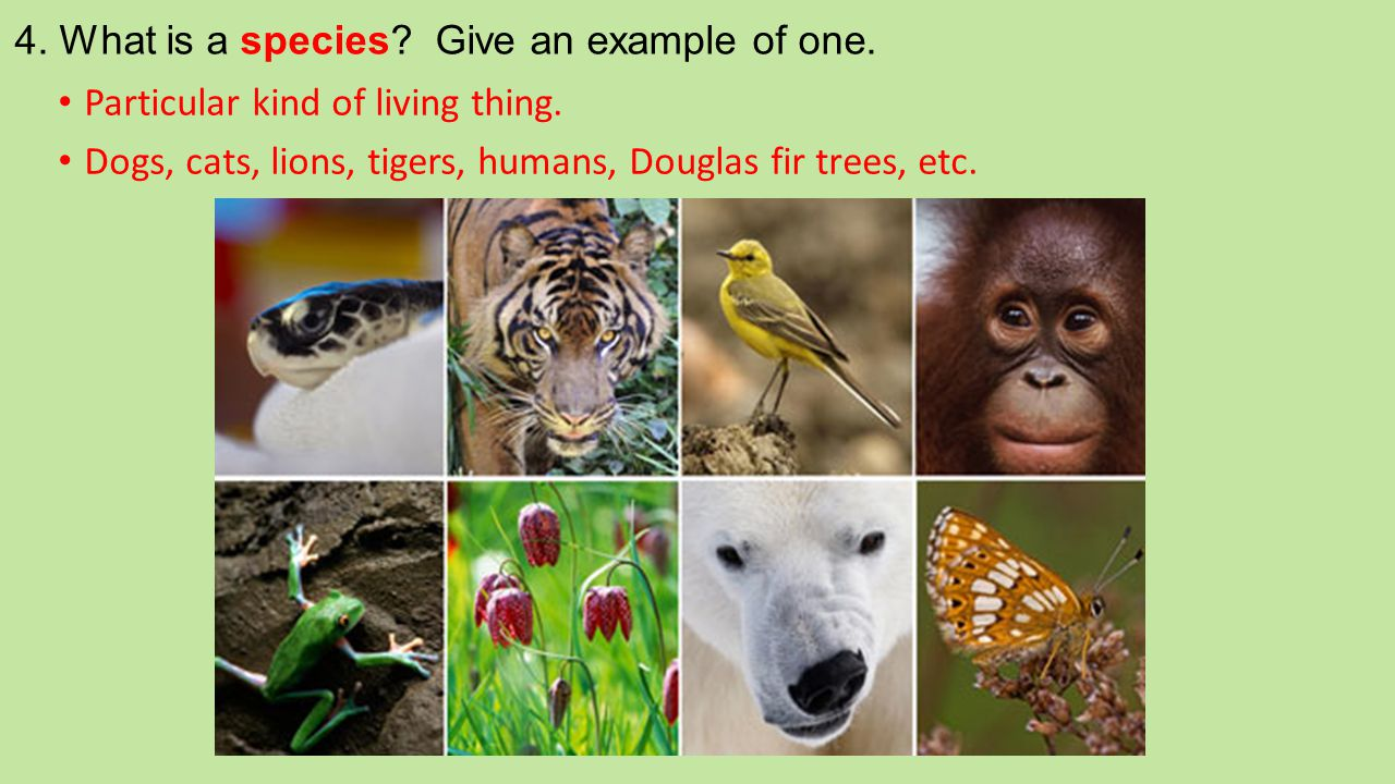 4. What is a species Give an example of one.