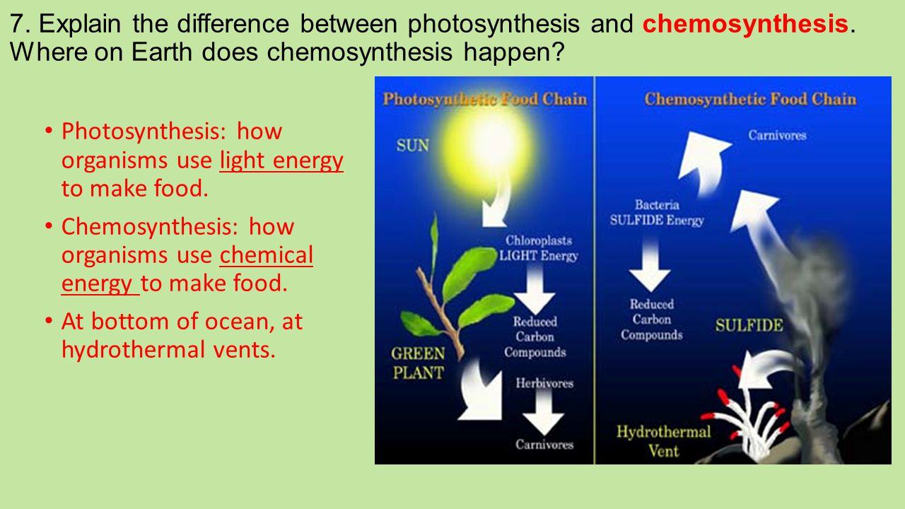 7. Explain the difference between photosynthesis and chemosynthesis