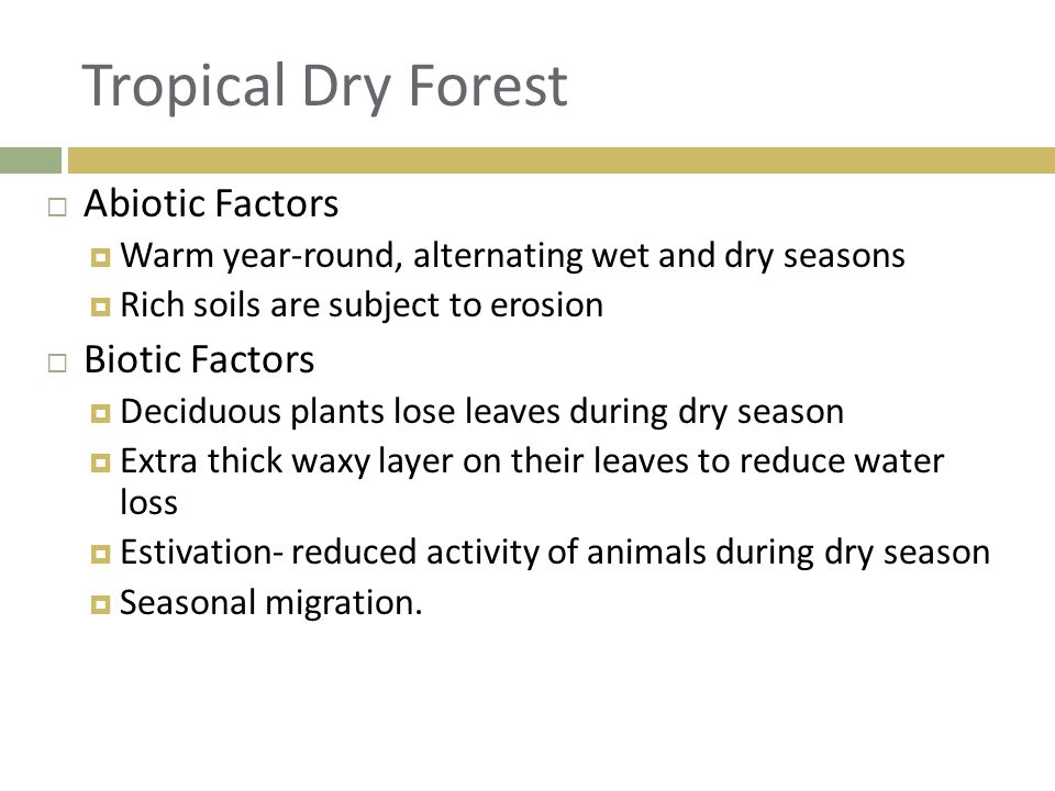 Tropical Dry Forest Abiotic Factors Biotic Factors