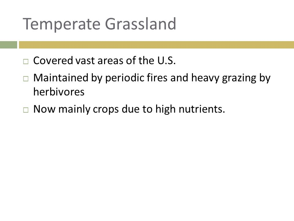Temperate Grassland Covered vast areas of the U.S.