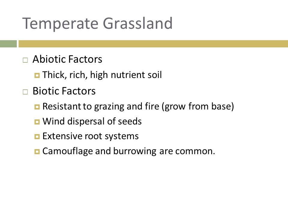 Temperate Grassland Abiotic Factors Biotic Factors